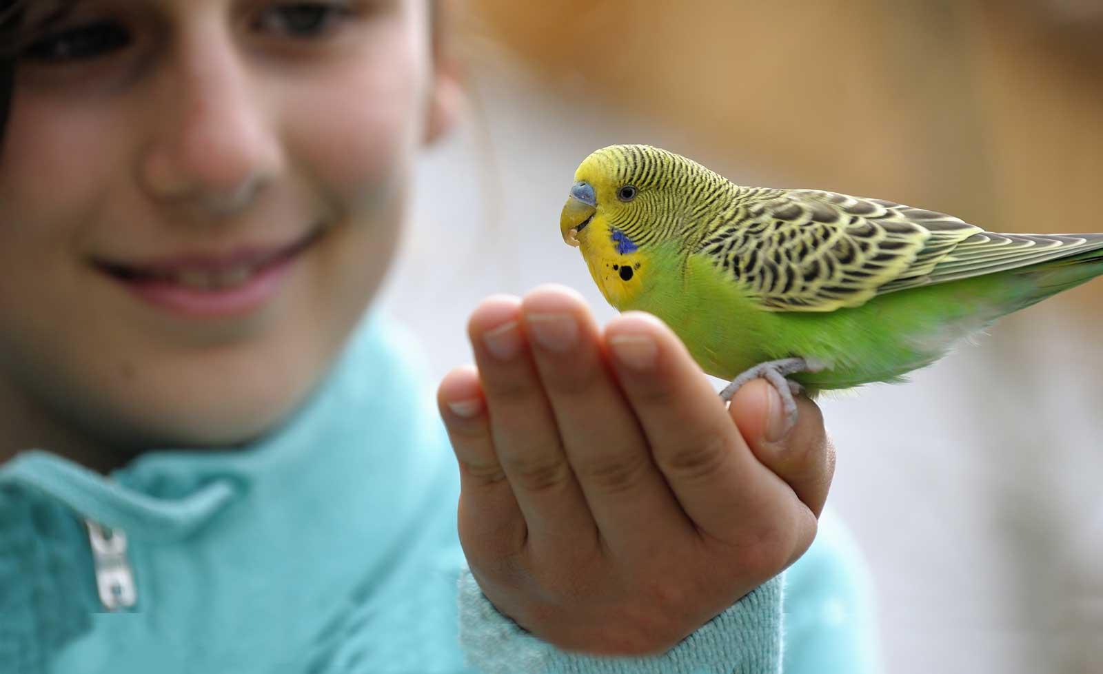 Pet Care info at AnimalWorld Panama Amazon