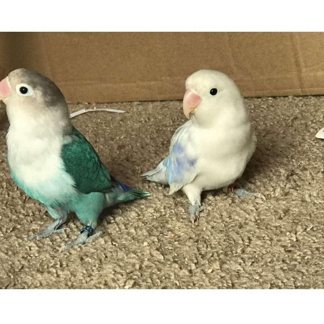 Pooles aviary