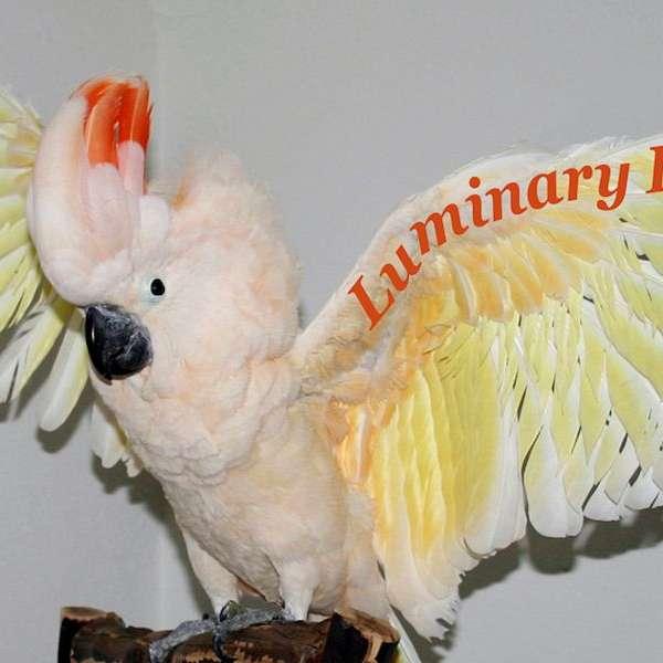 Luminary Parrots
