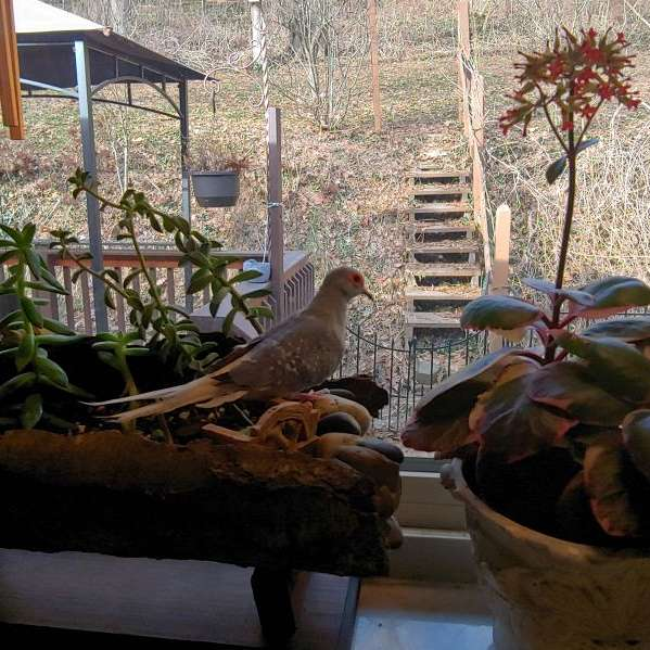 Sharon's Birds
