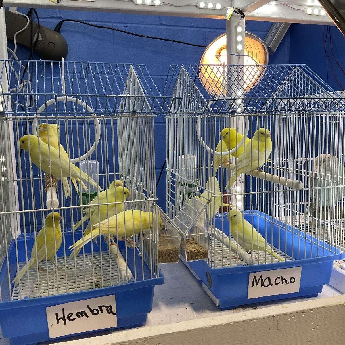 parakeet-budgie house