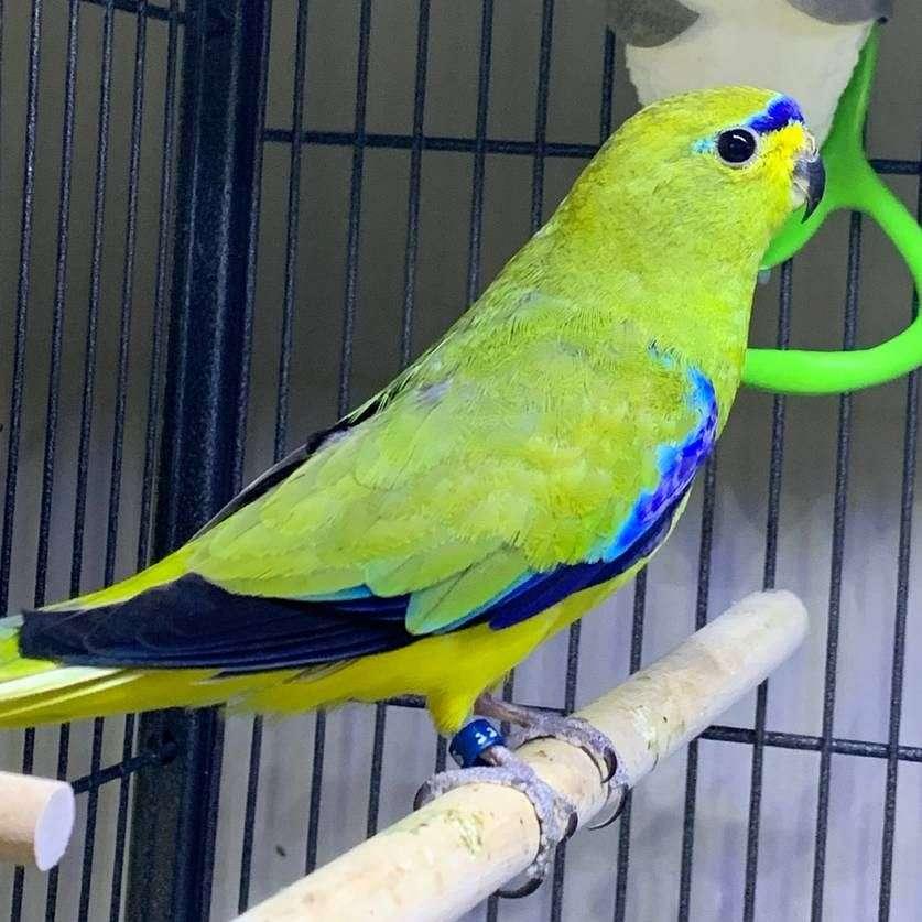 New Eden Avian Conservancy