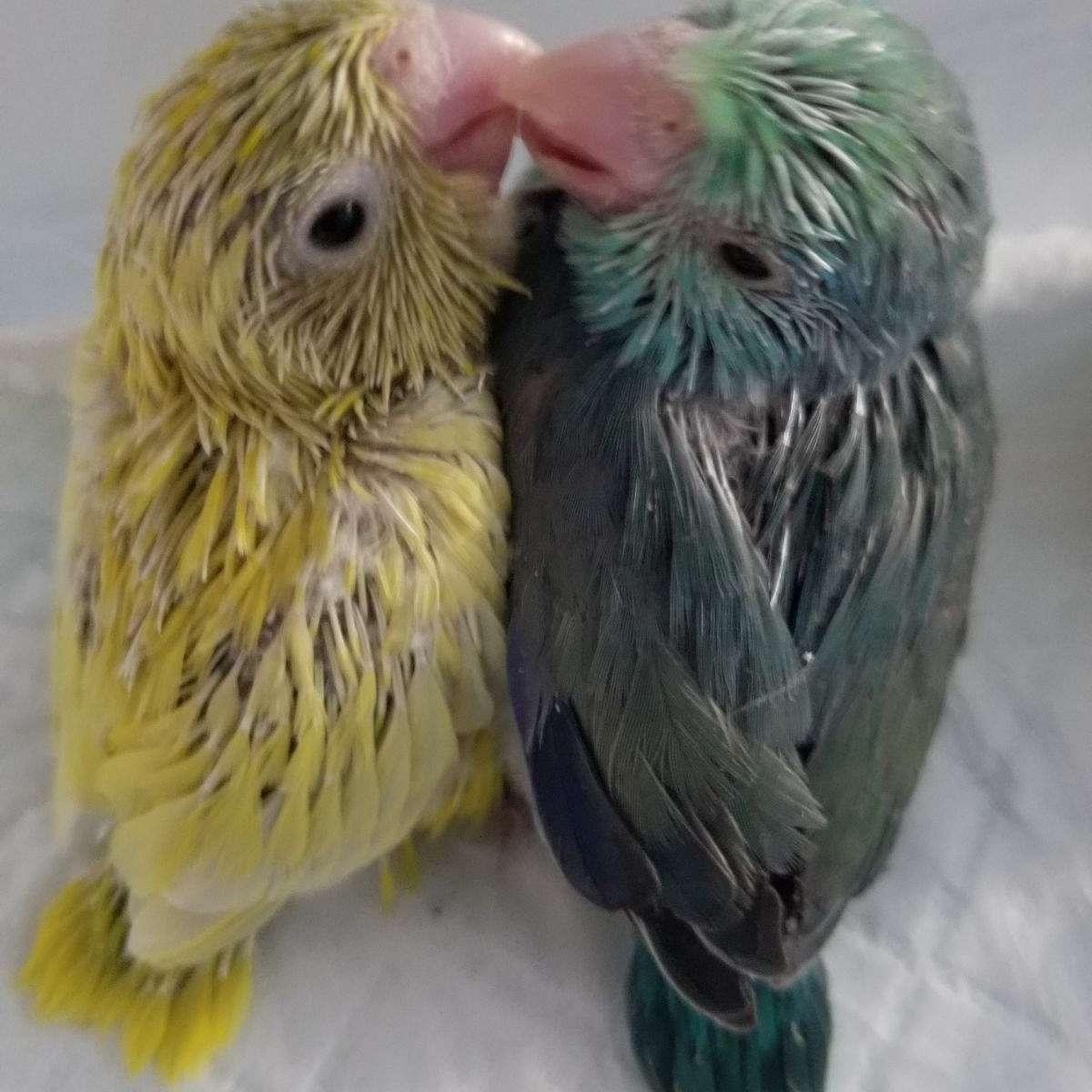 Noble's Sweet Little Tweets Aviary