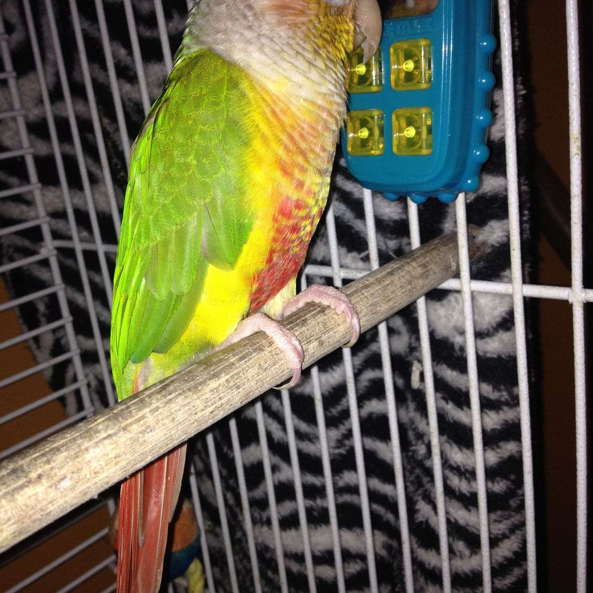 My Feathered Friends Aviary