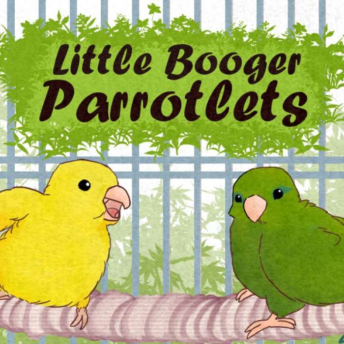 Little Booger Parrotlets