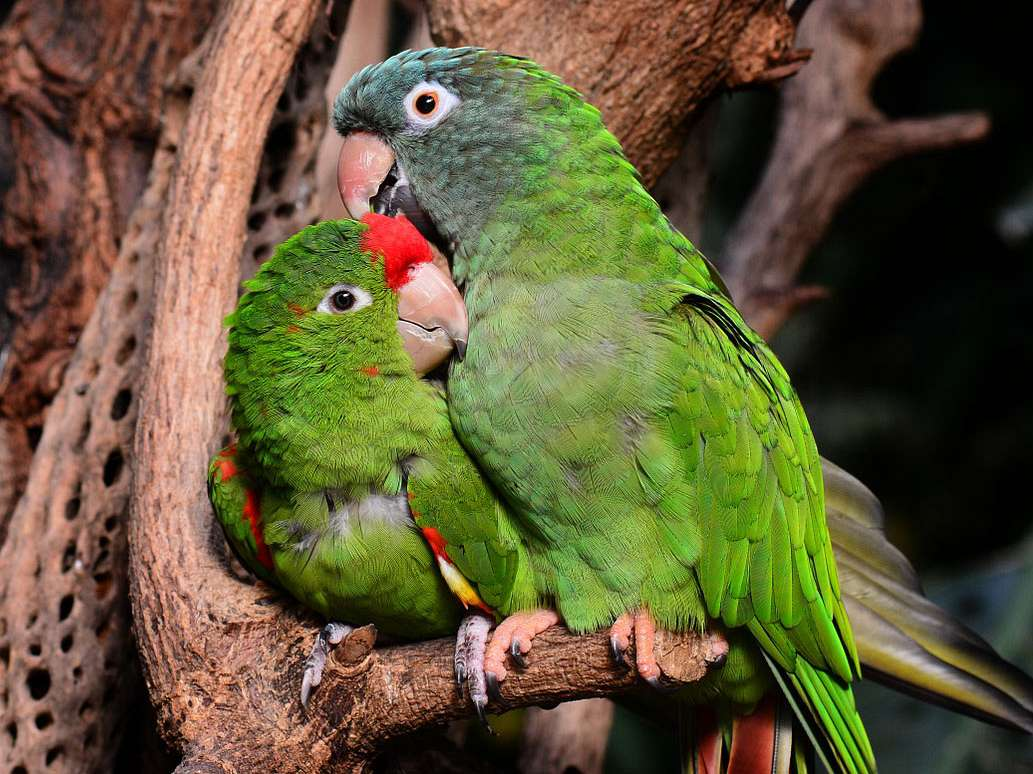 Bonded Pairs of Birds