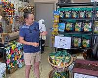 companion-bird-for-sale