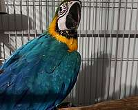 large-bird-for-sale