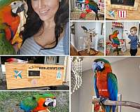 playful-mexican-red-amazon-parrot-for-sale