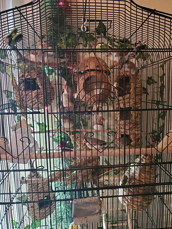 brown-bird-for-sale-in-colorado-springs-co