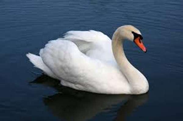 white-bird-for-sale-in-frankston-tx