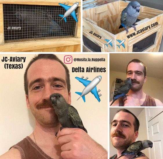 red-green-cheek-conure-for-sale