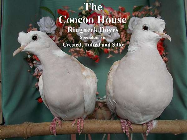 bird-for-sale-in-beacon-falls-ct