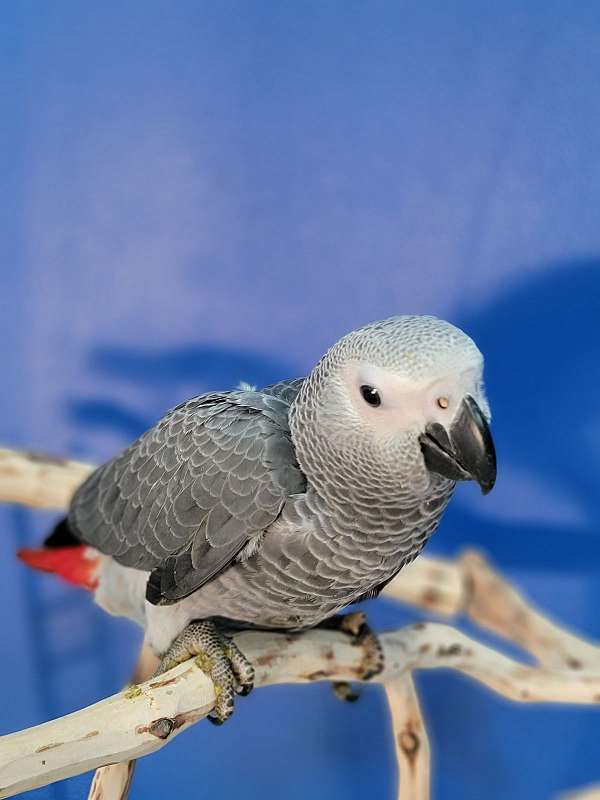cute-bird-for-sale