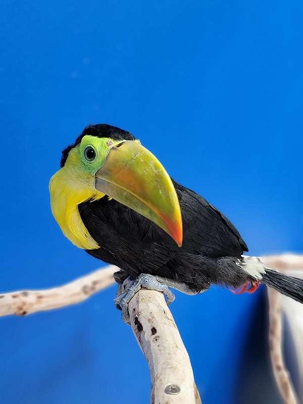bird-parrot-for-sale-in-flower-mound-tx