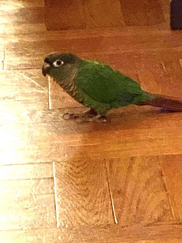 young-bird